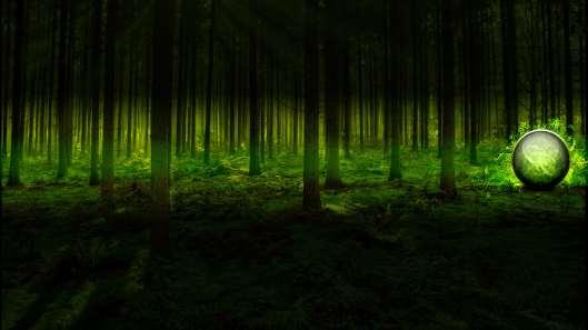 bosque 3